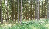 Trail Walk Theux - bronrome . monthouet . chefna . bronrome - Photo 10