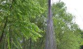 Randonnée Gesves - Sentiers d'Art 2019 / Gesves-Ohey - Photo 13