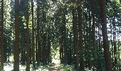 Trail Theux - autour de Bronromme a travers campagne fagne et forêt  - Photo 11