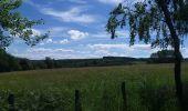 Trail Theux - autour de Bronromme a travers campagne fagne et forêt  - Photo 2