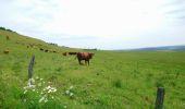 Trail ALLANCHE -  Cantal-Maillargues-Puy de Mathonière - 12.8km 320m 4h00 - 2019 06 25 - Photo 8