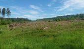 Trail Theux - autour de Bronromme a travers campagne fagne et forêt  - Photo 10