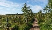 Trail Theux - autour de Bronromme a travers campagne fagne et forêt  - Photo 14