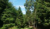 Trail Theux - autour de Bronromme a travers campagne fagne et forêt  - Photo 6