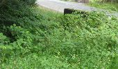 Randonnée Marche Gesves - GESVES- Le Pré D'Amite- N°07- Bois  - Photo 31