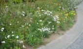 Randonnée Marche Gesves - GESVES- Le Pré D'Amite- N°07- Bois  - Photo 23