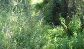 Randonnée Marche Ohey - OHEY- Jallet (Hodoumont) N°14 Patrimoine  - Photo 3