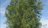 Randonnée Marche Ohey - OHEY- Jallet (Hodoumont) N°14 Patrimoine  - Photo 25