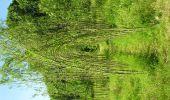 Randonnée Gesves - Sentiers d'Art 2019 / Gesves-Ohey - Photo 24