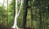Trail Gesves - SENTIERS D'ART - 141 km - Ciney, Gesves, Hamois, Havelange, Ohey et Somme-Leuze - Photo 36
