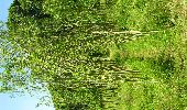 Trail Gesves - SENTIERS D'ART - 141 km - Ciney, Gesves, Hamois, Havelange, Ohey et Somme-Leuze - Photo 33