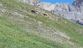 Trail Walk SAINT-DALMAS-LE-SELVAGE - camp des fourches - Photo 32