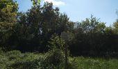 Randonnée SENTHEIM - Chemin de croix - Photo 2