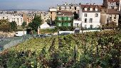 place PARIS - Les vignes de Montmartre - Photo 1