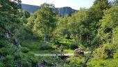 place STOSSWIHR - Près de la grotte Dagobert - Photo 1