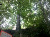 place OTTROTT - 01 - Le Château d'Ottrott, pas très visible à travers les arbres - Photo 1