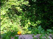 place SAINT-JEAN-AUX-BOIS - Point 62 - Photo 1