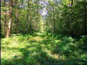 place SAINT-JEAN-AUX-BOIS - Point 60 - Photo 2