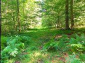 place SAINT-JEAN-AUX-BOIS - Point 60 - Photo 1